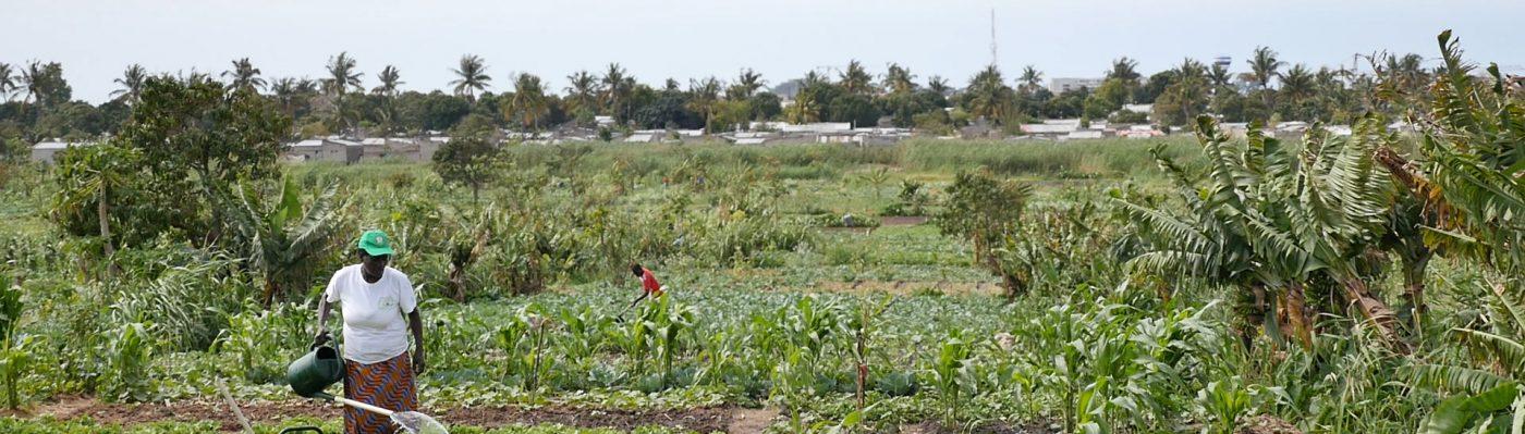 Cultivando Maputo